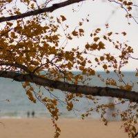 На море ветрено... :: Ольга