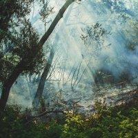 Пожар :: Евгения Фролова