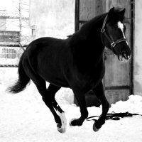 Лошадь в движении :: Ксения Валерьевна