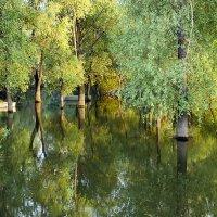 Утонувший лес. :: Евгений Ярдов