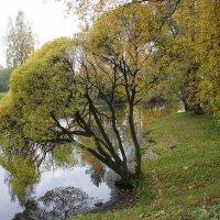 Вид на р. Охта с Большого Ильинского моста :: Елена Павлова (Смолова)