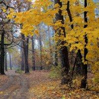 Уже хозяйкой бродит осень... :: Лесо-Вед (Баранов)