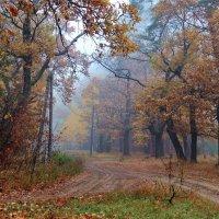 Дождевым мерцая листопадом... :: Лесо-Вед (Баранов)