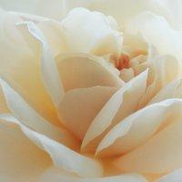 Дарите женщинам цветы. :: Катрина Деревеницкая