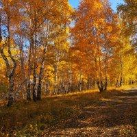 Оранжевая осень... :: Александр Попов
