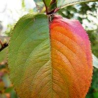Осенний лист :: Вера Щукина