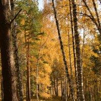 Осень в лесу :: grovs