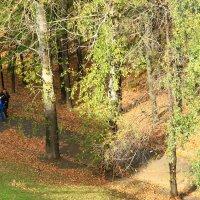 Под сенью осенних дерев :: Владимир Андреевич Ульянов