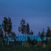Вечереет в лесу :: Михаил Вандич