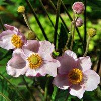 Неизвестный цветок. :: Александр Калинин
