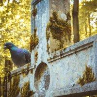 Смоленское кладбище Санкт-Петербург :: Ольга Скоринова