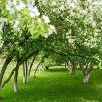 Весна! :: Дмитрий Сахнов