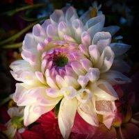 Последние цветы октября :: Андрей Заломленков