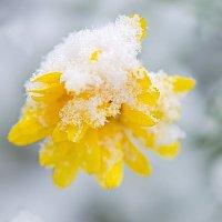 первый снег :: Svetlana Plasentsiia