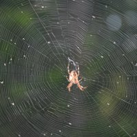 Hardened spider :: Николай Воробьёв