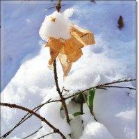 Осенний лист в танце с зимой :: Лидия (naum.lidiya)
