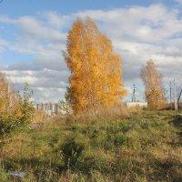 Берёза на осеннем ветру :: Наталья Золотых-Сибирская