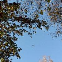 Самолёт в осеннем небе :: Наталья Золотых-Сибирская