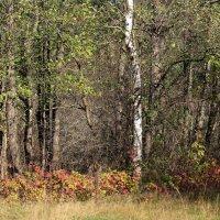 У ног деревьев. :: Николай Масляев