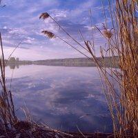 Озеро Сенеж. :: Alexander Antonov