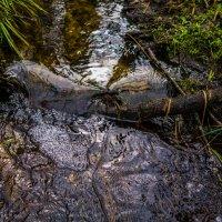 Лесной ручей :: Константин