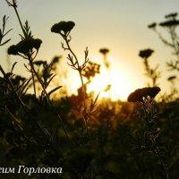 На счастье :: Максим Горловка