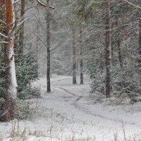Первый снегопад в лесу :: Исаков Александр