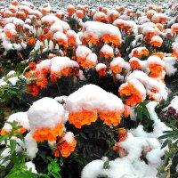 Первый снег :: Денис Кораблёв