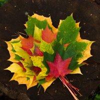 Осенний букет :: Виталий