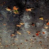 my autumn :: maRIAam ahaRONYyan