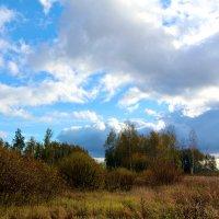 в поле :: Ольга (Кошкотень) Медведева