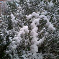 Первый снег :: Галина