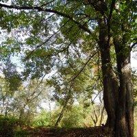 Осень в лесу :: Наталья Полочанка