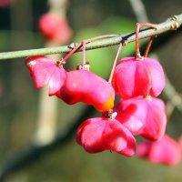 Лесные ягоды. :: Валентина ツ ღ✿ღ