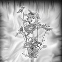 Черно-белый  гербарий.... :: Tatiana Markova
