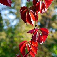 горящие листья :: Валерия Шамсутдинова