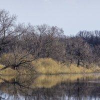 На озере :: Георгий Морозов