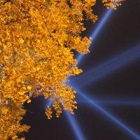 осень в лучах света :: Вера Моисеева