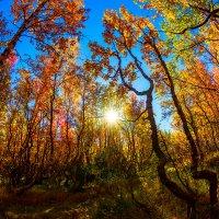 Осень :: Александр Неустроев