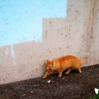 кот, гуляющий сам по себе :: Ольга Заметалова