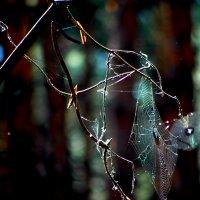 Лесные приключения :: Натали V