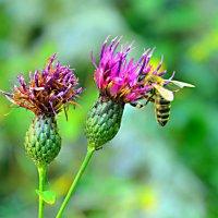 услада пыльцою цветка :: Элина Любицкая (Одинова)