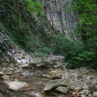 Лесные тропы :: pich