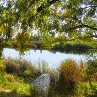 Тихо наступала осень... :: Тамрико Дат