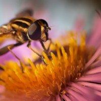 прогуляться по цветку :: Valdis Veinbergs