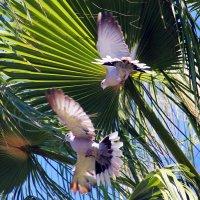 В листьх пальмы :: Александр 72 Мил
