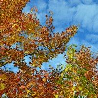 Осенние листья шумят и шумят в саду... :: Ольга