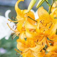Цветы - радость женская..) :: IL'YA Degtyarev