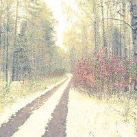 Зима в лесу :: Сергей Воронков