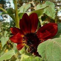 Пчела и шмель :: Нина Корешкова